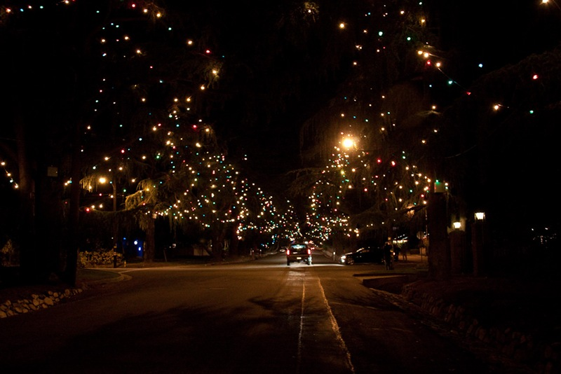 Christmas Tree Lane Iamnotastalker