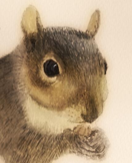 grey_squirrel3