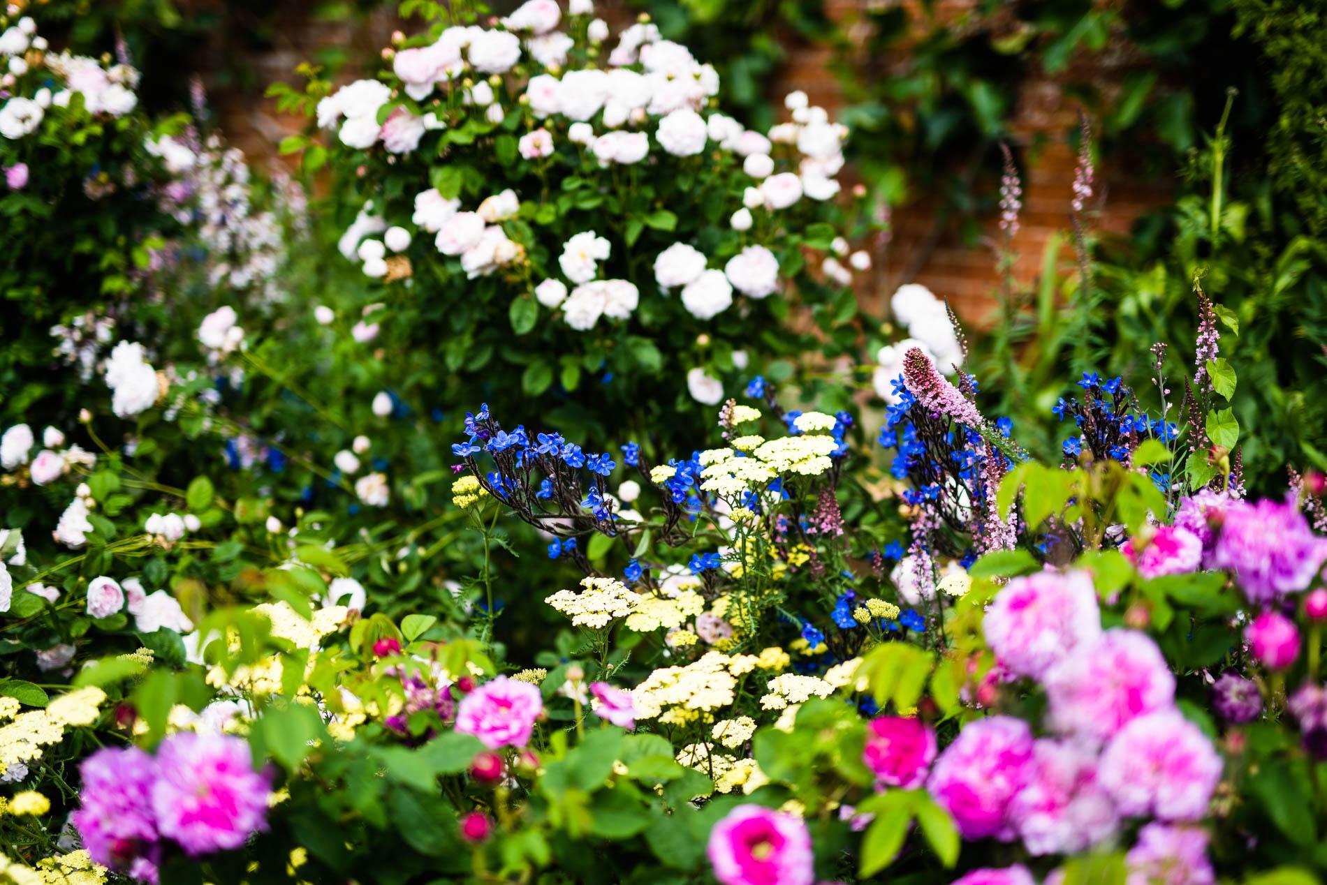 Arda, Botanica, England, Hampshire, Mottisfont, National Trust, Roses, The World