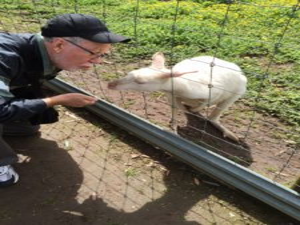 Hand-feeding a rare albino kangaroo.