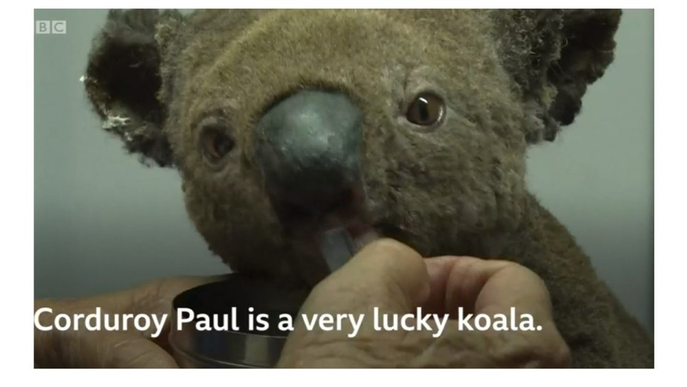 This image has an empty alt attribute; its file name is Koala.jpg