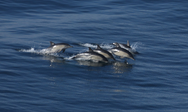 Dolphins-Sept-2015-1