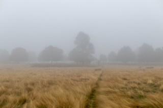 Richmond Park in the mist