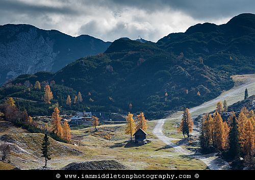 Trees on Vogel Mountain Ski Resort in Autumn, Triglav national Park, Slovenia