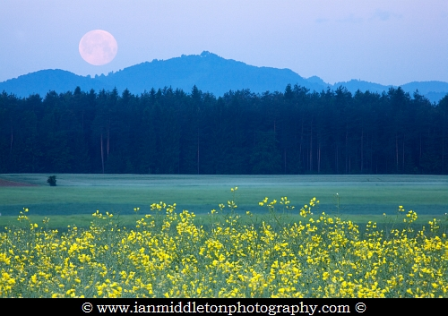 Full Moon setting over mountains and rapeseed field in the morning, Brnik, Slovenia.