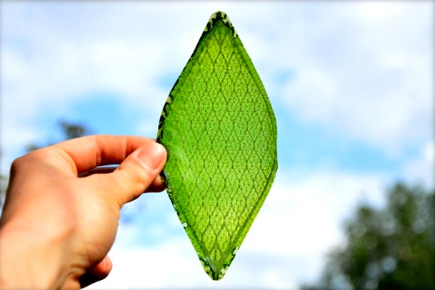 Artificial Leaf – The next big thing in the fight against climate change