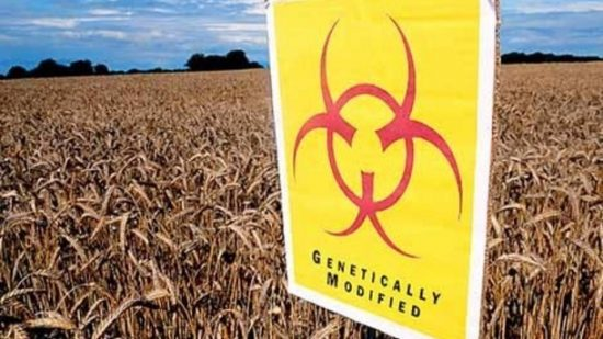 GM Crops in India – Pros & Cons
