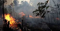 Amazon rainforest fires - Everything you need to know