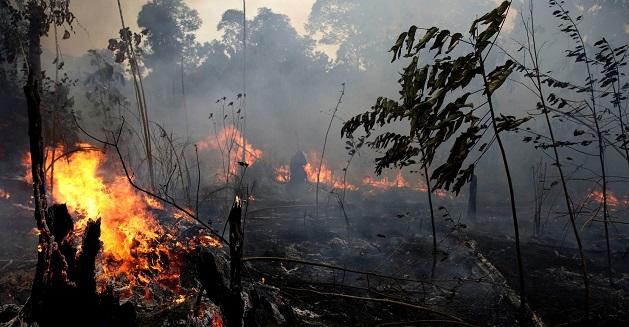 Amazon rainforest fires upsc essay notes
