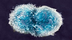 Stem Cells - Sources, Types, Applications, Concerns & Regulations
