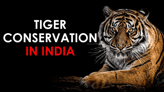 Tiger Conservation in India and the World – All You Need to Know