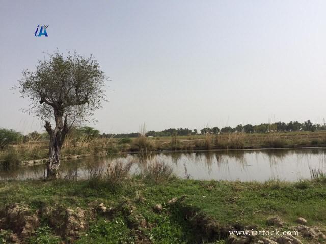 Ghreebwal Pond