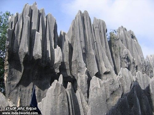 stone_forest03