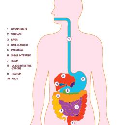 digestive system [ 1244 x 1541 Pixel ]