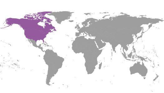 north american regional committees
