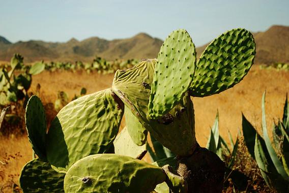 """<p>Desierto desierto de Tabernas (Almería) / <a href=""""https://www.flickr.com/photos/80943959@N00/4907752042/in/photolist-8tFvGw-3fWbaB-FwWiP-6gwWK7-bHtMEg-DYmCgq-ddDd2u-7am8e3-3uvkQZ-3aNPbp-mTV5gB-eaW2XU-6PGX6m-eboB8A-ebp1Bs-KP1o-ebicVv-ebhNEz-ebihMX-eboCwC-8TKcCw-ebhTS4-ebhQwe-ebie84-8YUdUz-3mYCeW-6gpvgP-eboPiA-eboVHW-eboLqm-ebi4hc-ebikCF-ebp48C-feNmYU-8q3TMi-ebozuA-eboMLo-8TKn7u-ebow9m-ebi2N4-eaW2U7-eboDYy-q1D4M-ebinUR-bTP9q6-ebi6aB-6kTVSq-eH3bcU-8TKfK7-4DuRQ6"""" title=""""Ir a la galería de kyezitri"""" target=""""_self"""">kyezitri</a></p>"""