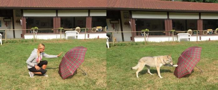<p>La investigadora Claudia Fugazza y su perro en una demostración simple del experimento. / Mirko Lui</p>