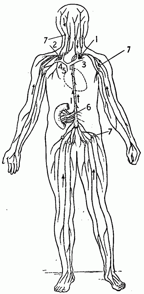 Lymph Nodes Sheet Coloring Pages