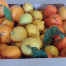 degustación2 213x213 - Naranjas y limones de Ibiza - Ibizagrove inicio