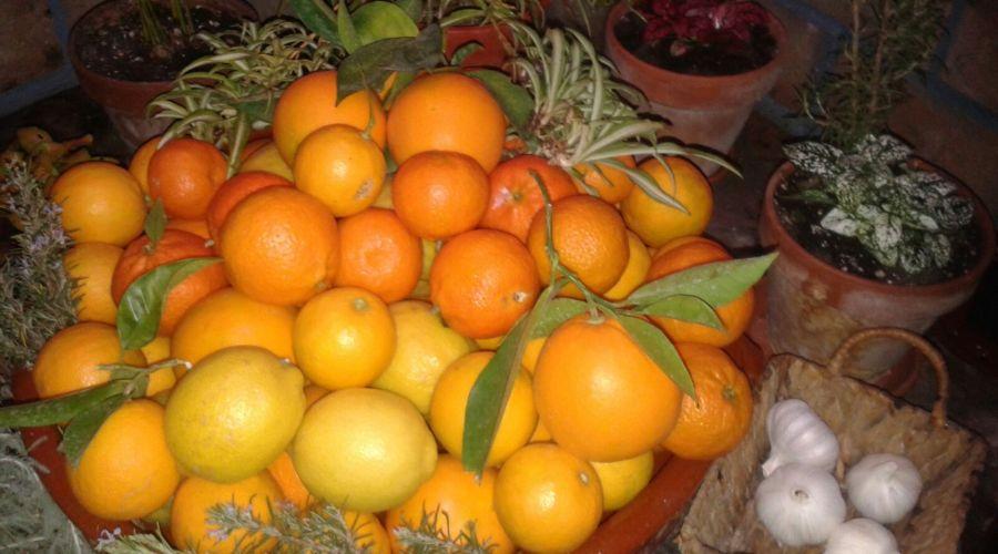 IMG 20160104 WA0000 900x500 - Naranjas y limones de Ibiza - Ibizagrove inicio