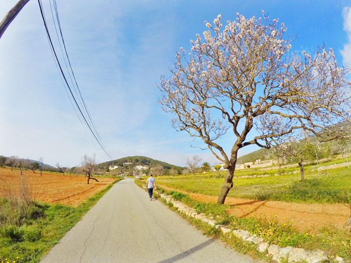 ruta-santa-ines-ibiza