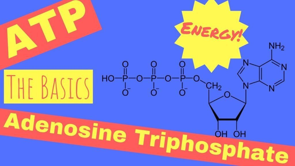 cartoon of adenosine triphophosphate