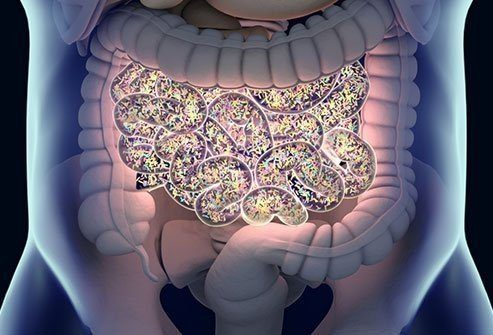 vivid drawing of human gut
