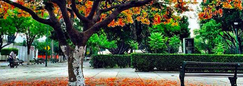 Los Árboles de Flamboyán de Tehuacán