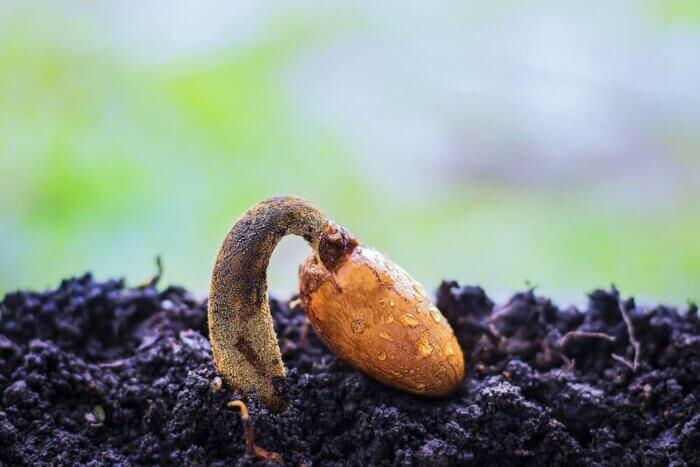il-seme-quiescente