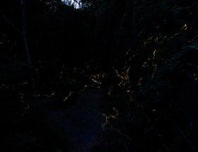 lucciole-trekking-acquedotto-di-colognole