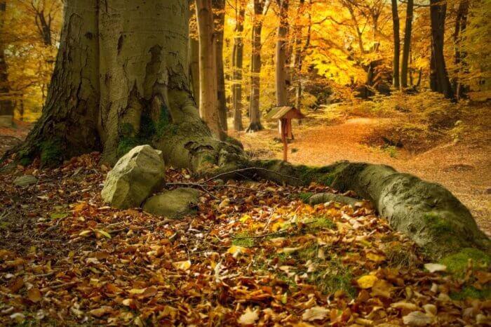 trekking-casentino-autunno