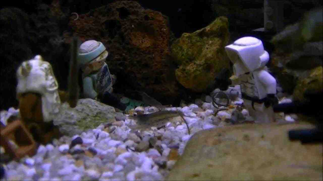 Bathroom Fish Decor