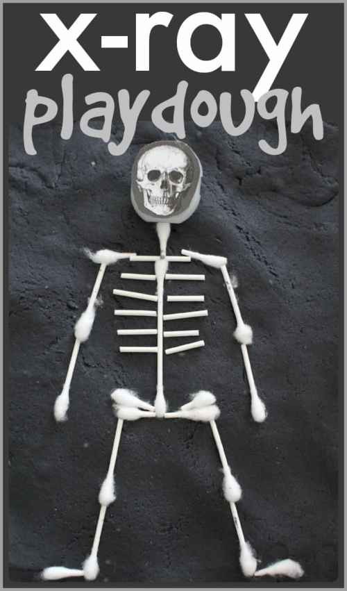 small resolution of learn about the skeletal system with x ray playdough