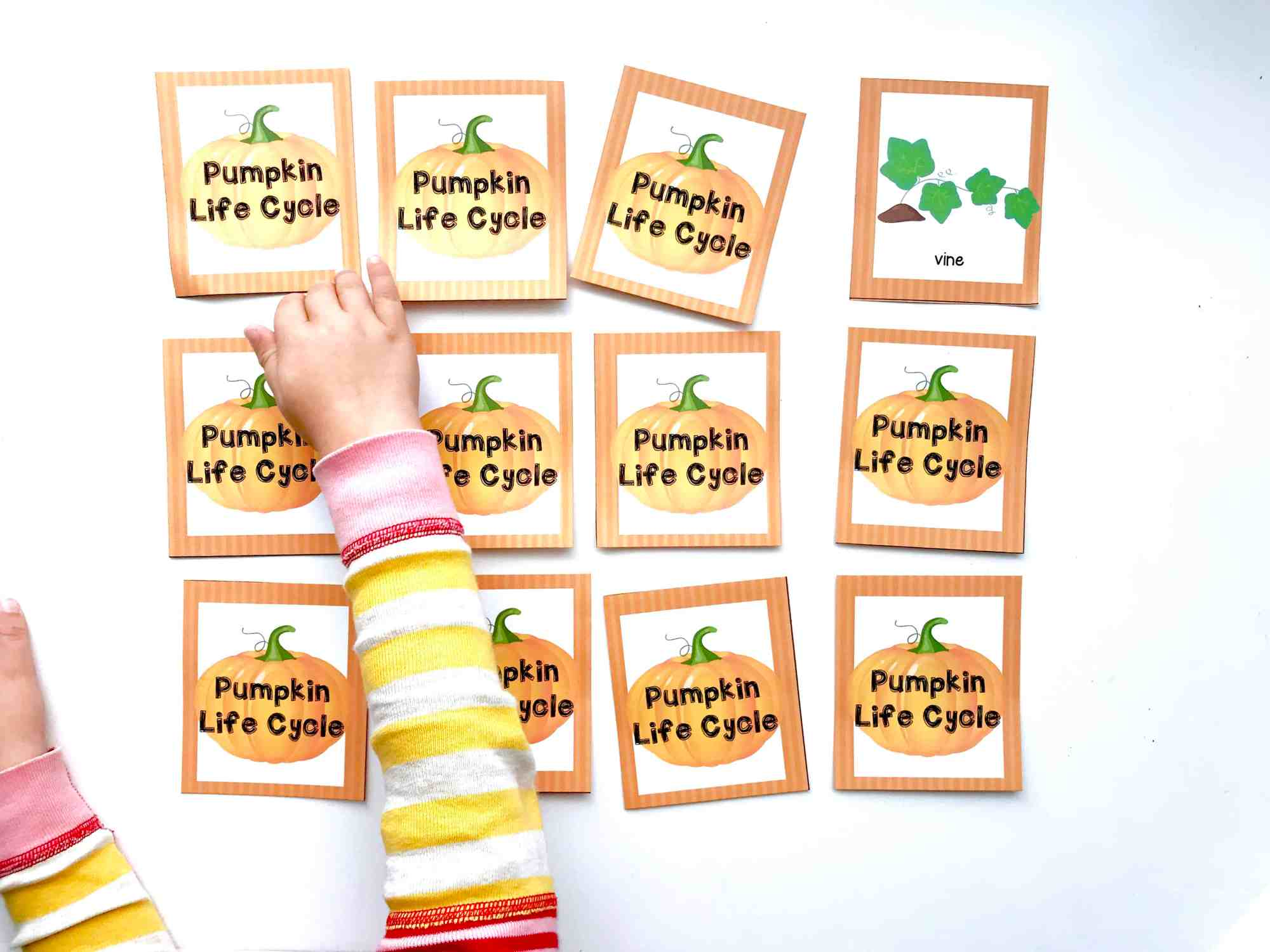 hight resolution of finding matches for pumpkin life c