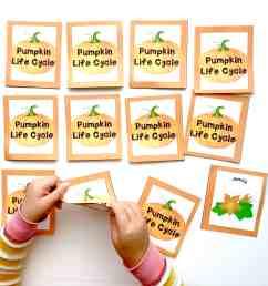 playing pumpkin life cycle printable memory game [ 4032 x 3024 Pixel ]