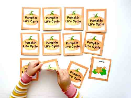 small resolution of playing pumpkin life cycle printable memory game