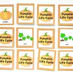 pumpkin life cycle memory [ 3874 x 2906 Pixel ]