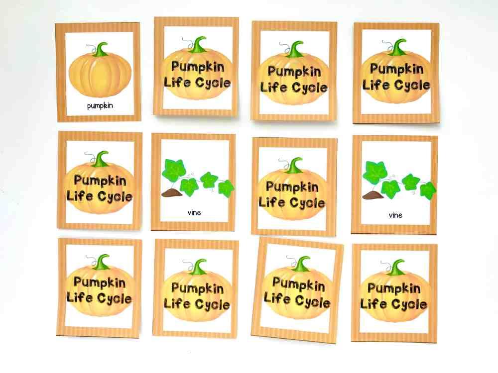medium resolution of pumpkin life cycle memory