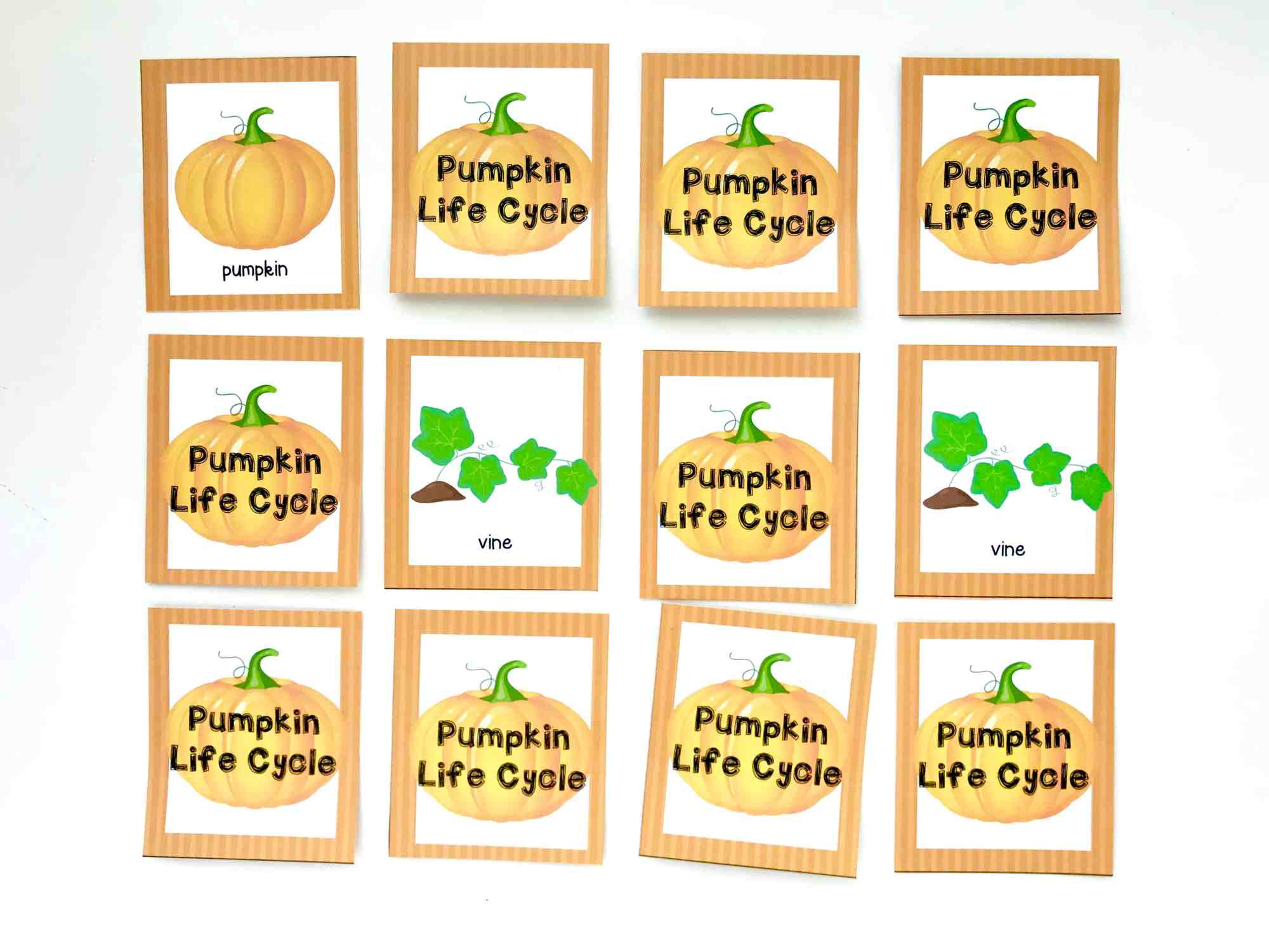 hight resolution of pumpkin life cycle memory