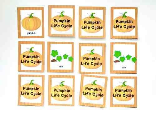 small resolution of pumpkin life cycle memory