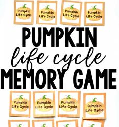 pumpkin life cycle printable memory game [ 650 x 1300 Pixel ]