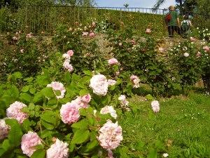 Besuchen Sie im Frühling die blühenden Gärten von Florenz