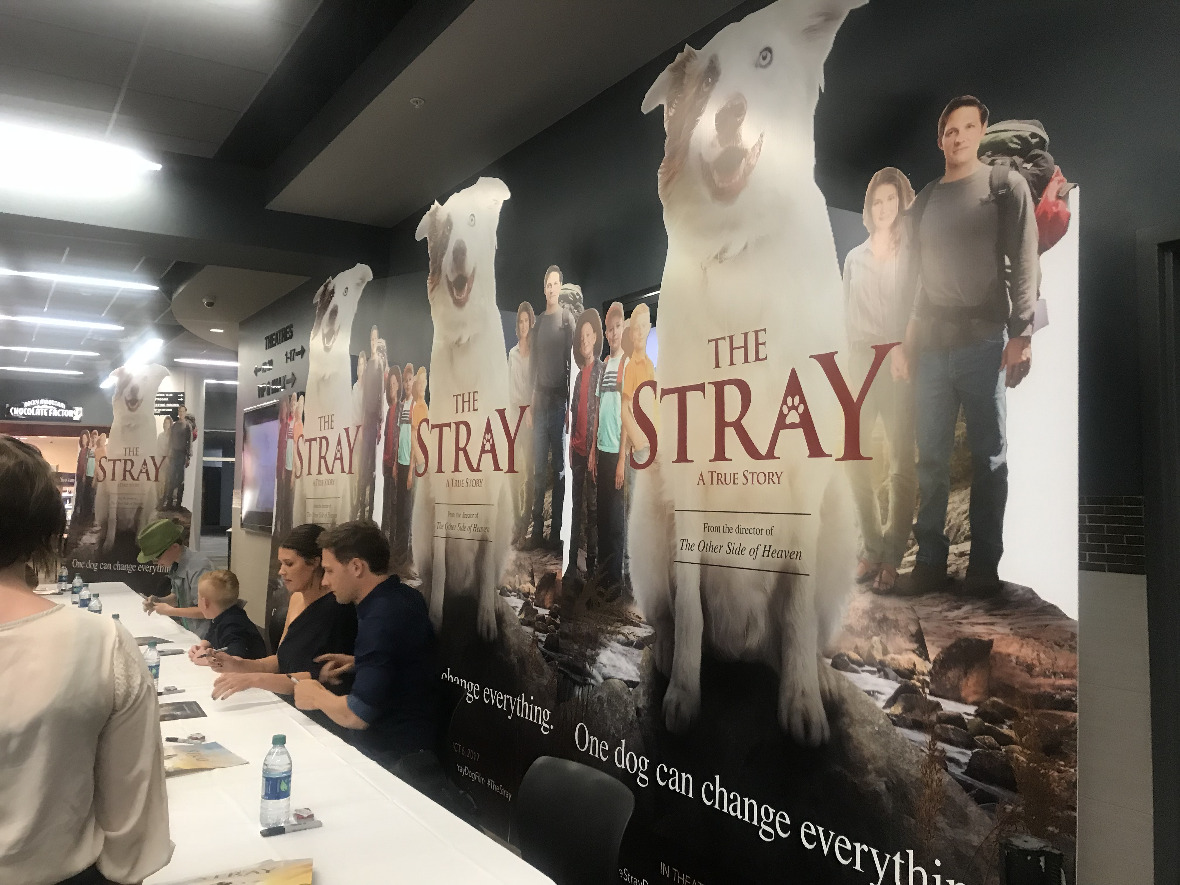 The Stray is in Theaters Today