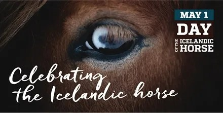 day-of-the-icelandic-horse