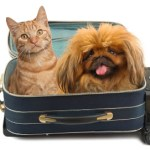 Essential tips for travelling with your pets