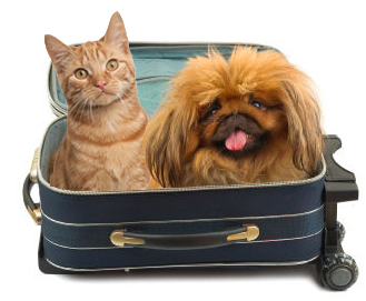 top, tips, essential, pets, out, about, travel, care