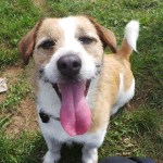 Norfolk's Most Unwanted Dogs Are Desperate To Find Homes