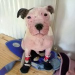 Buddy beats the rest to win the RSPCA's 'Best Transformation' award