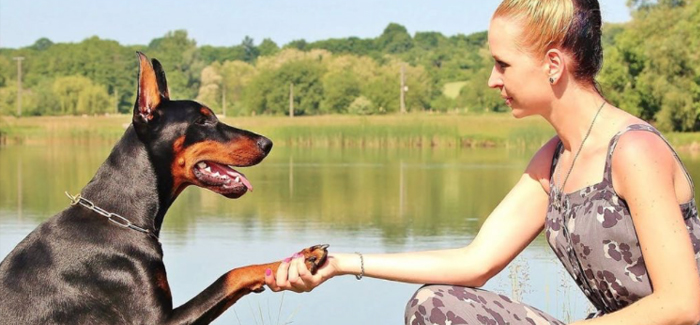 Doting Dog Owners Will Spend More Than £18,000 Over Their Pet's Lifetime