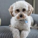 5 interior décor tips for a pet-friendly home